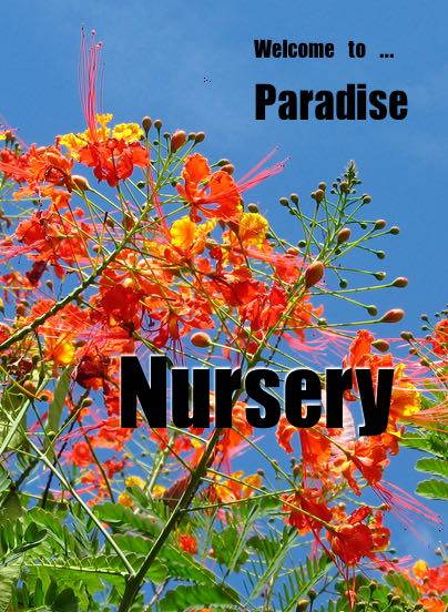 Paradise Nursery Llc Is Conveniently Located In The Ne Part Of San Antonio Texas Off Redland Rd And Owned Operated By Mr Raymond Dady